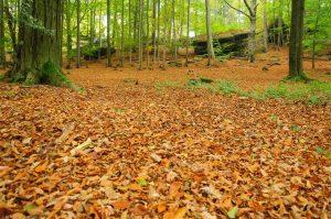 Herbst Wald Sächsische Schweiz Laub
