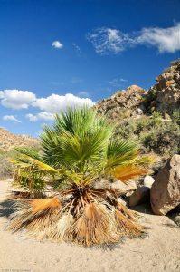 Cottonwood Spring Palme Baum Sand Fels