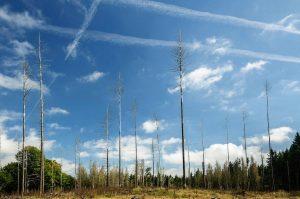 Tot Wald Baum Landschaft