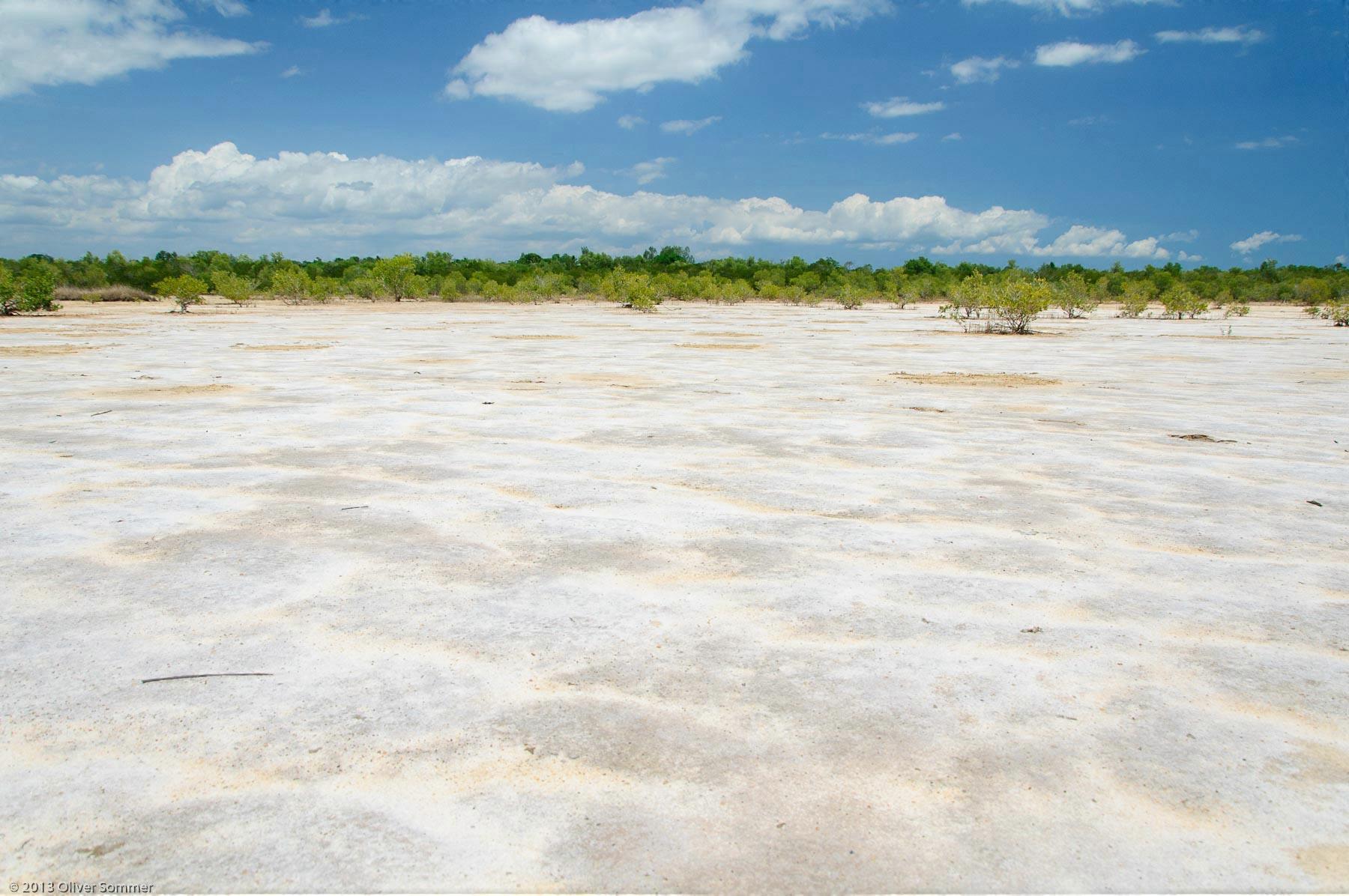 trocken Madagaskar Mangrove Rhizophora Mucronata Sand