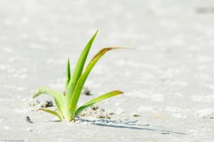 grün Gras weiß Sandstrand