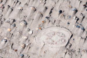 Strand Muscheln Quallen Sand Schale