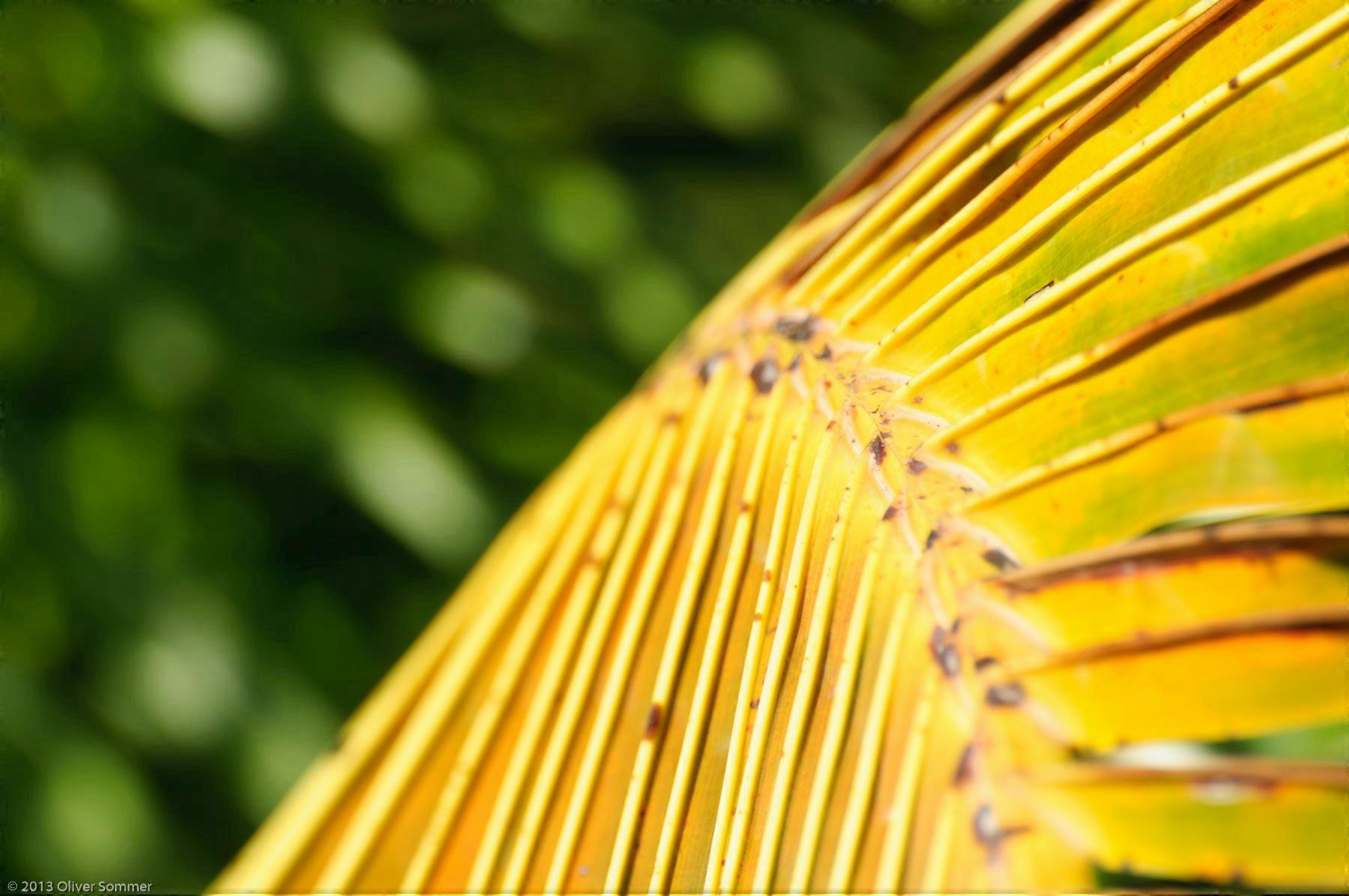 Palme Baum Blatt tropisch gelb