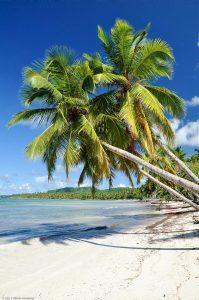 Karibik Dominikanische Republik Palme Paradies Sandstrand