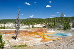 Heiße Thermal Quelle Yellowstone Nationalpark
